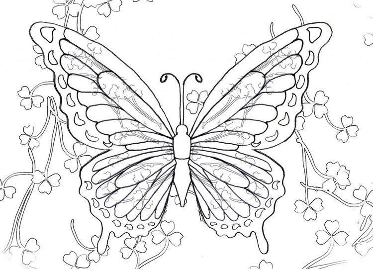 Intricate Butterfly Coloring Pictures