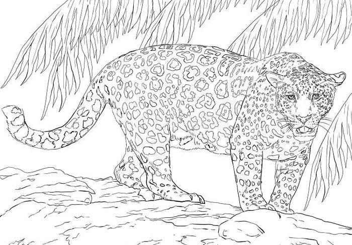Jaguar coloring pages for adults