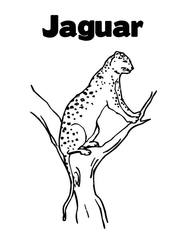 Jaguar Perching On Tree Branch Coloring Pages