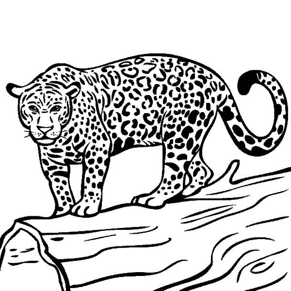 Jaguar Ready To Hunt Coloring Pages