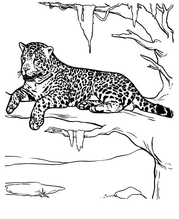 Jaguar Take A Rest Coloring Pages