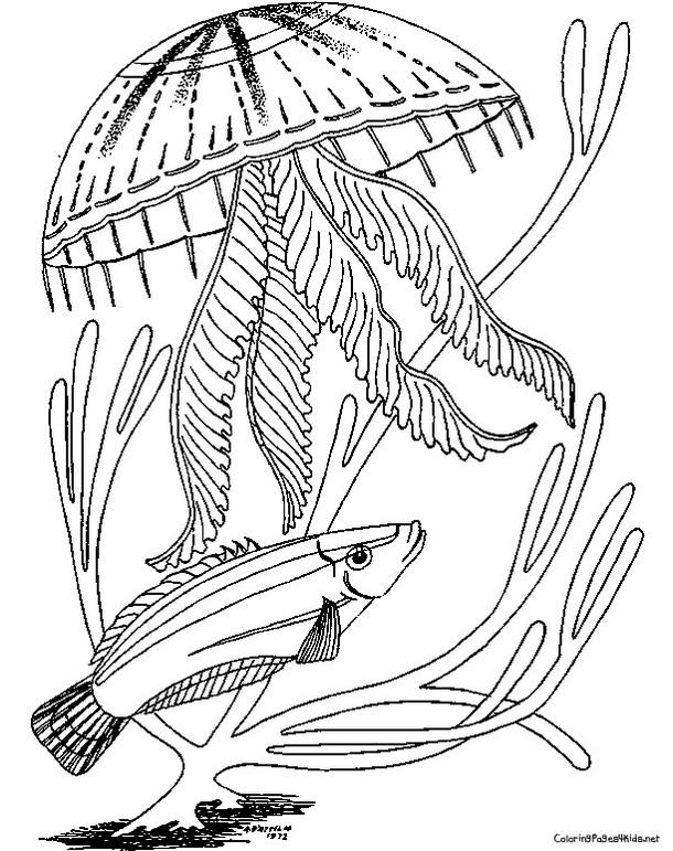 Jellyfish Coloring Pictures
