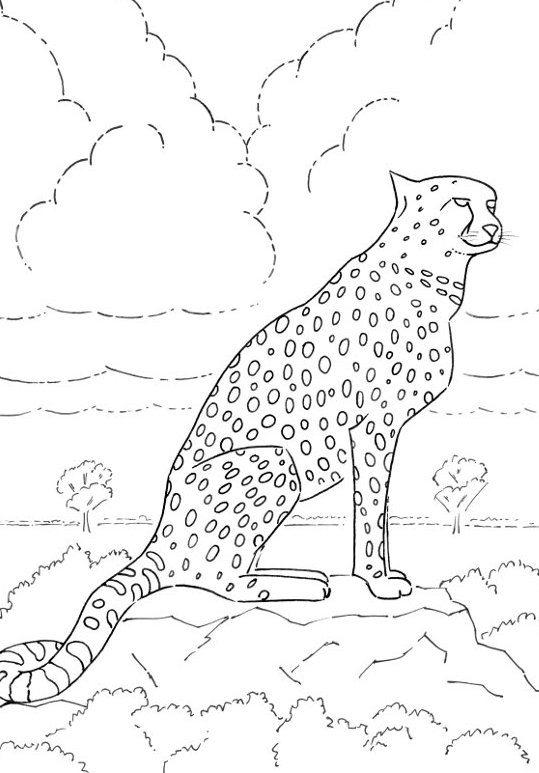 Kids Coloring Pages Of A Cheetah