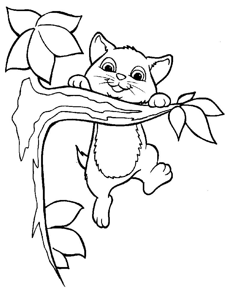 Kitten Coloring Pages For Girls