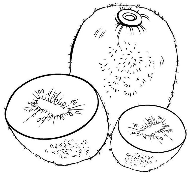 Kiwi Fruit Coloring Pages For Children