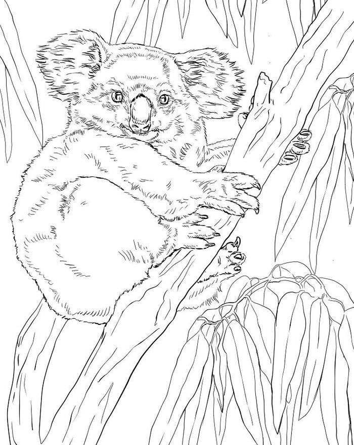 Koala climbing tree coloring pages