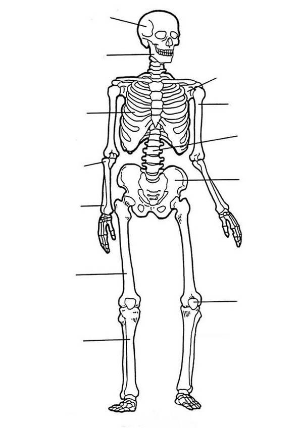 Label Of Human Skeleton In Human Anatomy Coloring Pages