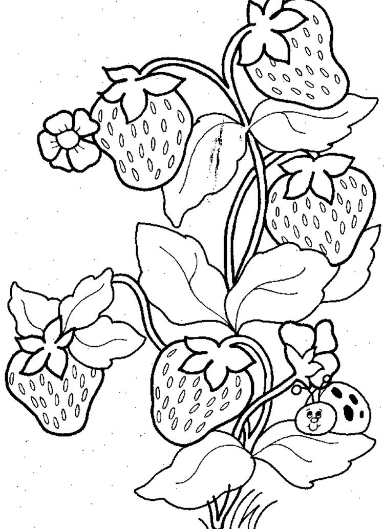 Ladybug And Strawberry Fruit Coloring Pages