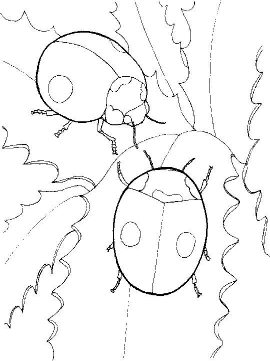 Ladybug Coloring Pages Couple