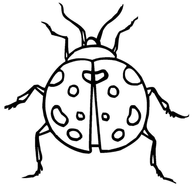 Ladybug Coloring Pages Free To Print