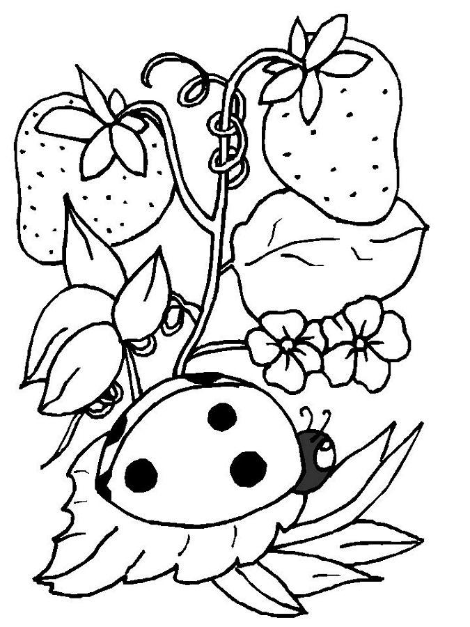Ladybug Coloring Pages On Strawberry Tree
