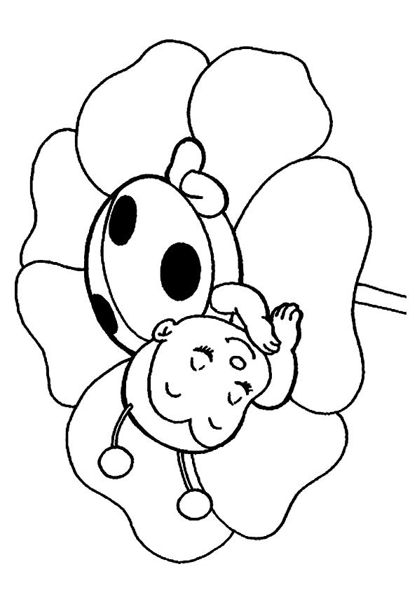 Ladybug Coloring Pages Sleeping On A Flower