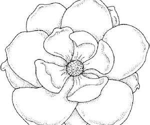 Large flower coloring pages