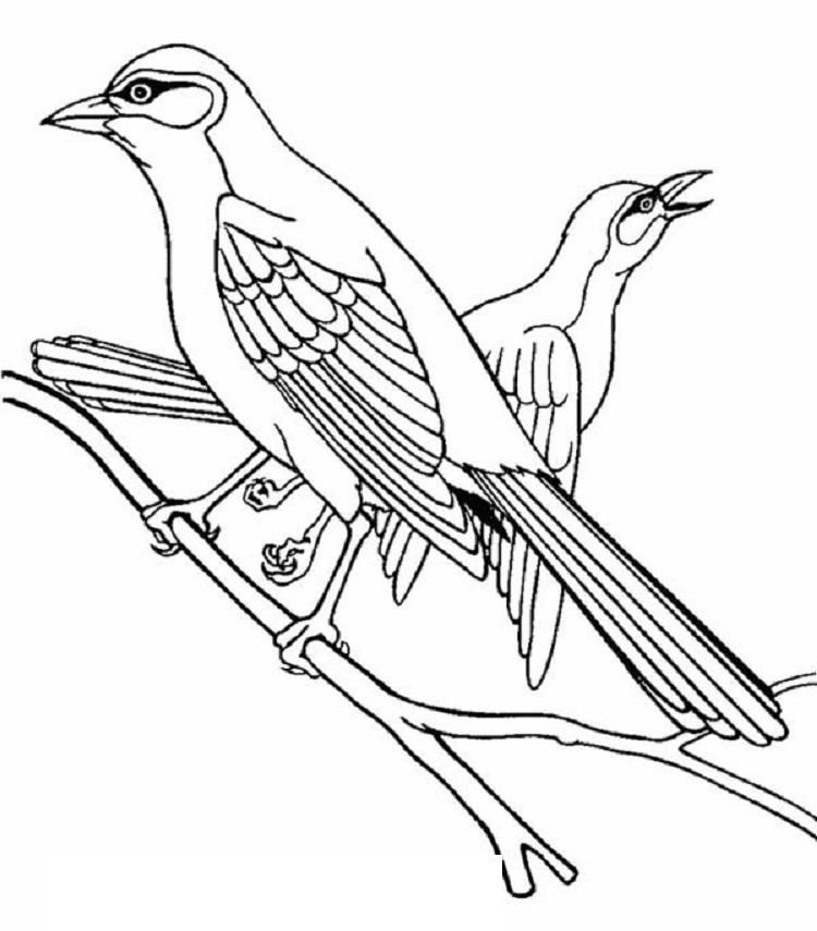 Larry Bird Coloring Page