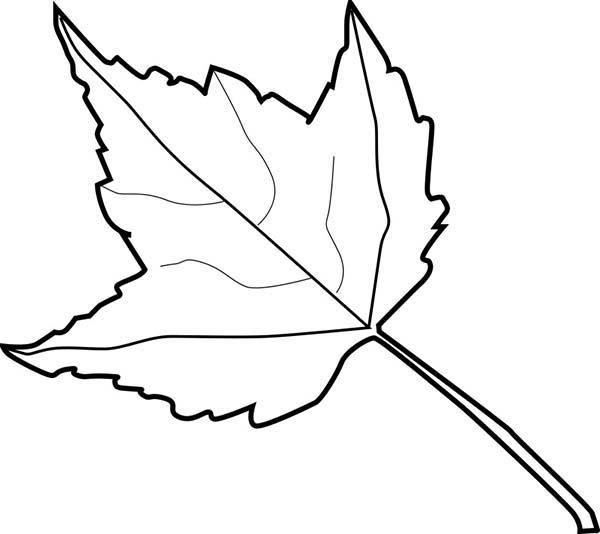 Learn Aabout Autumn Leaves Coloring Pages