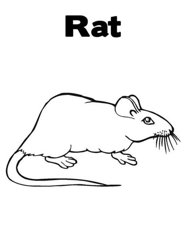 Learn About Mouse And Rat Coloring Pages