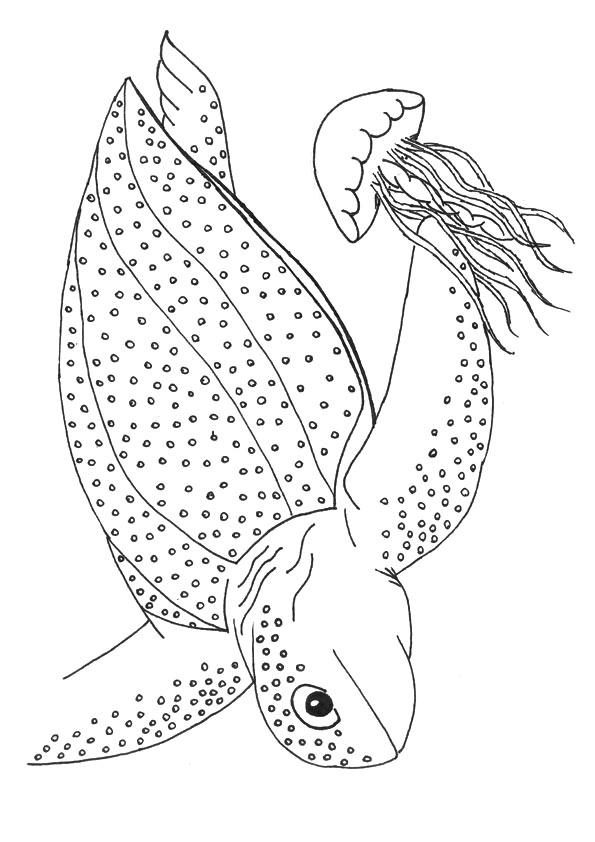 Leatherback Sea Turtle Coloring Pages