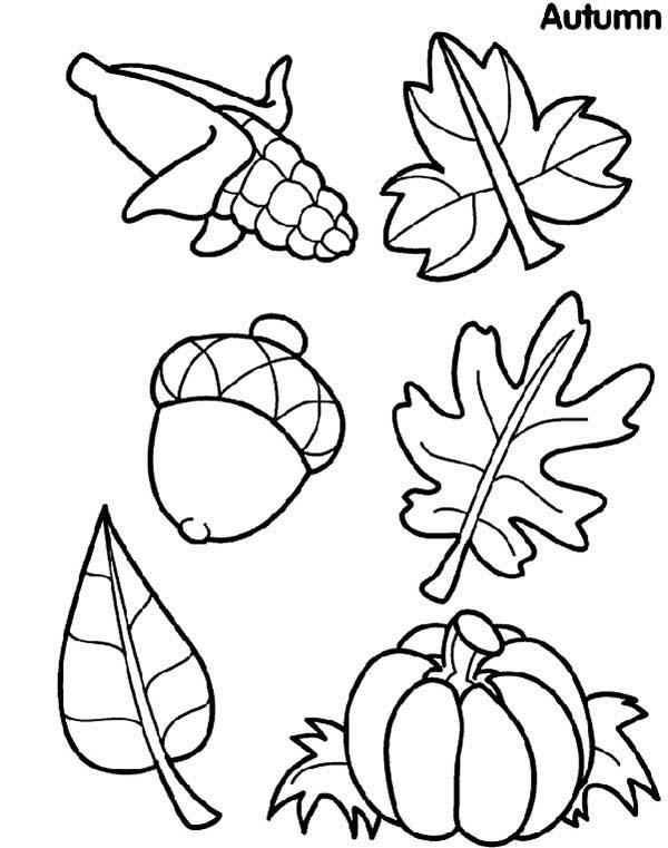 Leaves And Fruits Coloring Pages