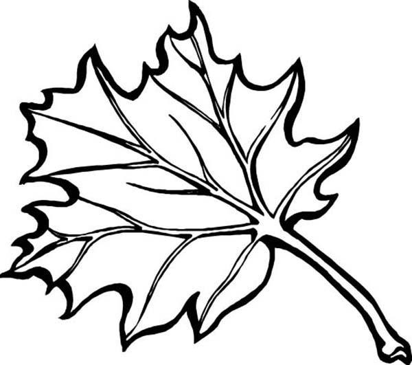 Leaves Fall In Autumn Coloring Pages