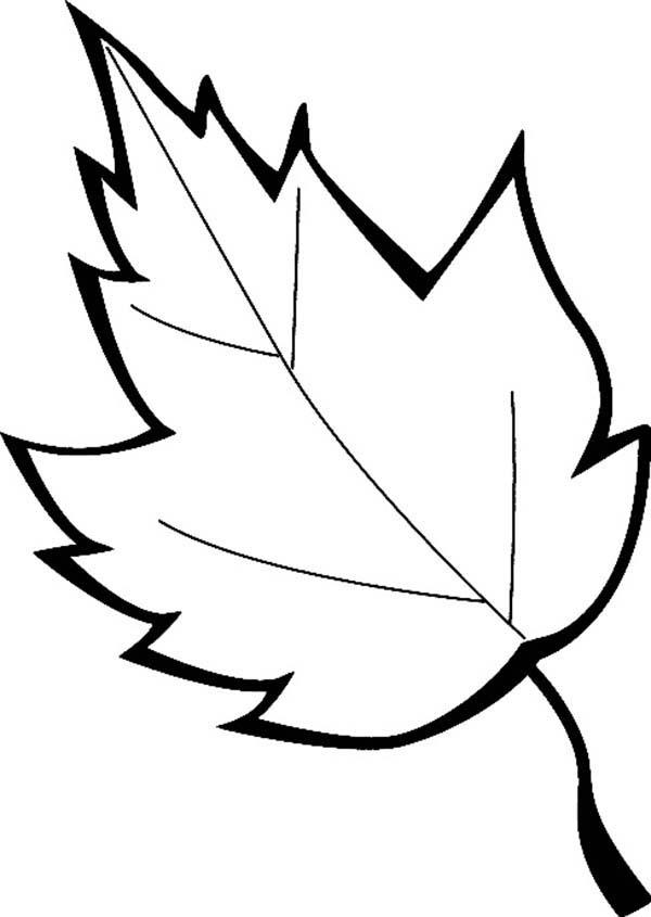 Leaves Falls Coloring Pages
