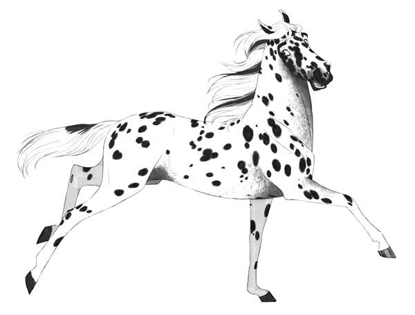 Leopard Appalooshorse Coloring Pages