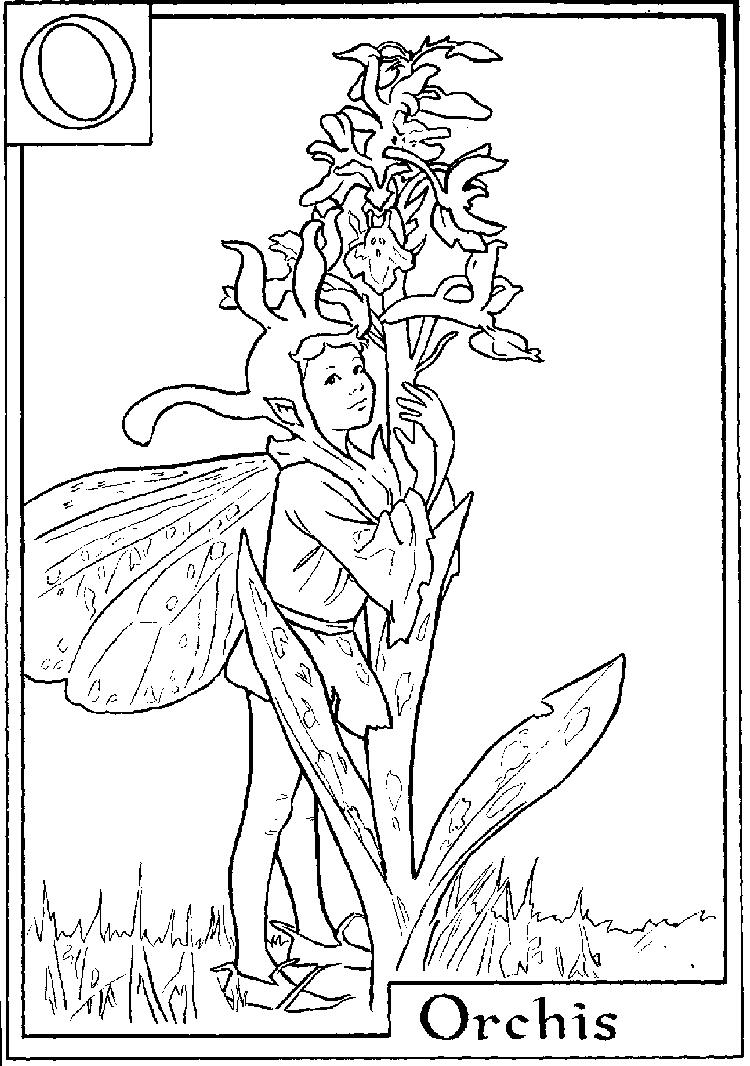 Letter O For Orchis Flower Fairy Coloring Page