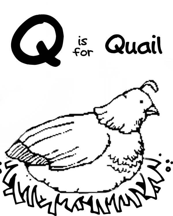 Letter Q For Quail Coloring Page For Preschool Kids