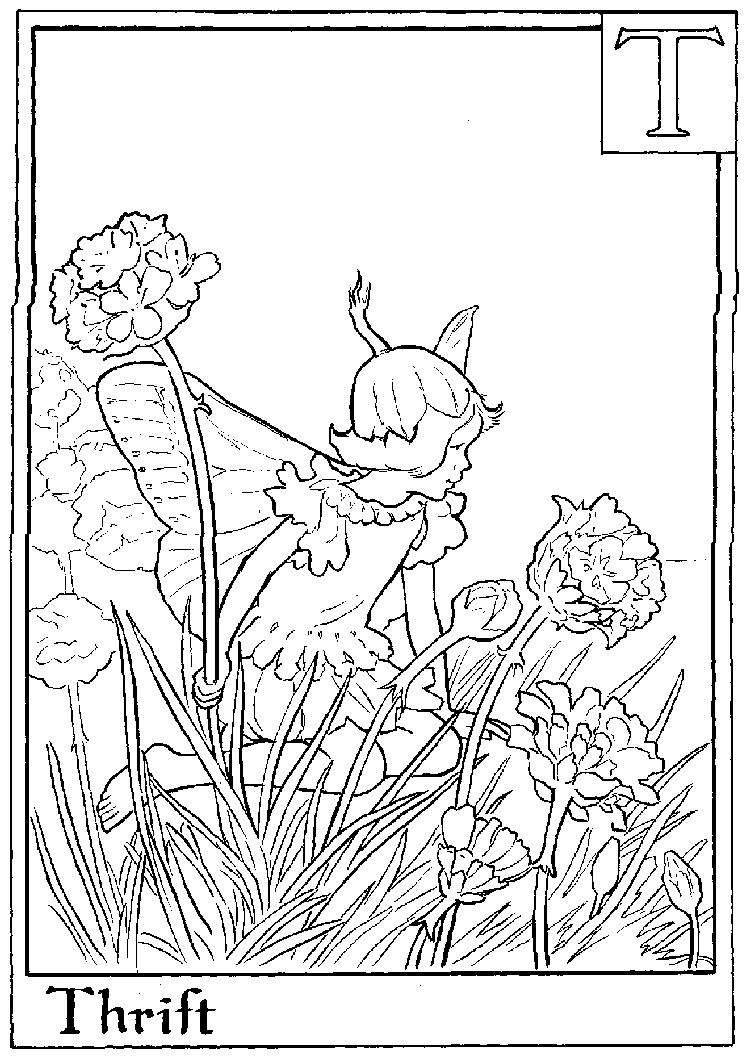 Letter T For Thrift Flower Fairy Coloring Page