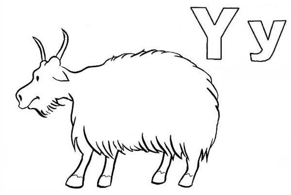 Letter Y Coloring Page Animal Edition
