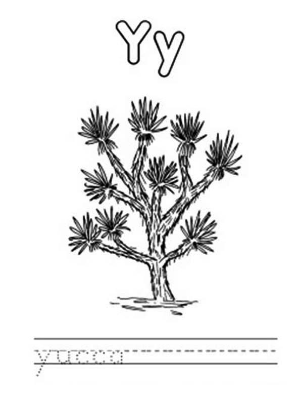 Letter Y Is For Yucca Coloring Page