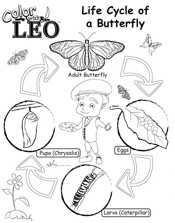 Life Cycle Of Butterfly Coloring Pages