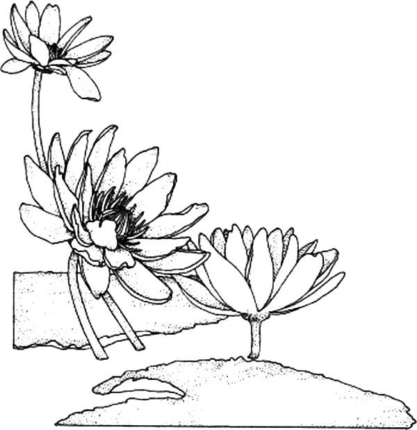 Lily 2 Coloring Page