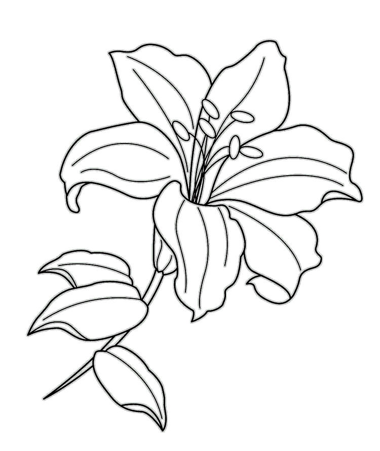 Lily Coloring And Activity Page