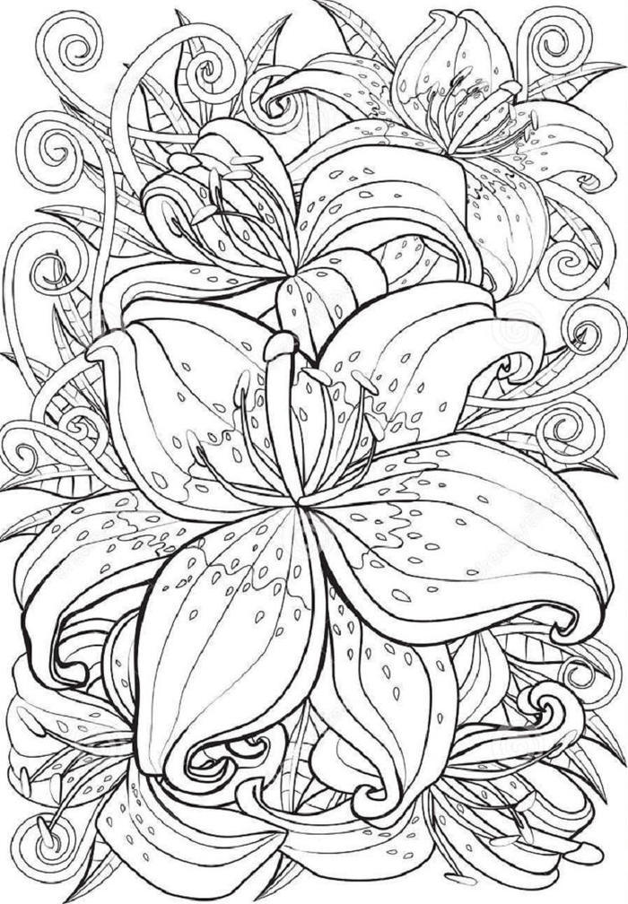 Lily Coloring Pages For Adults