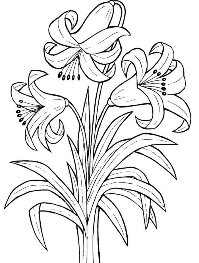 Lily Coloring Pages Printable