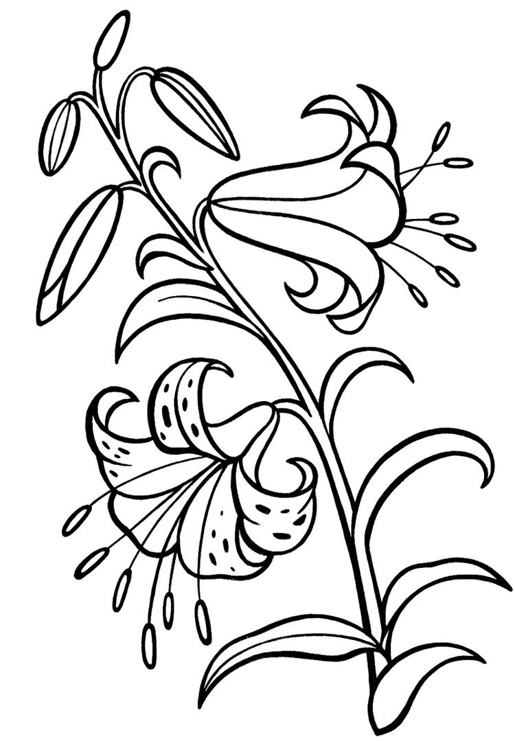 Lily Flower Plant Coloring Sheet