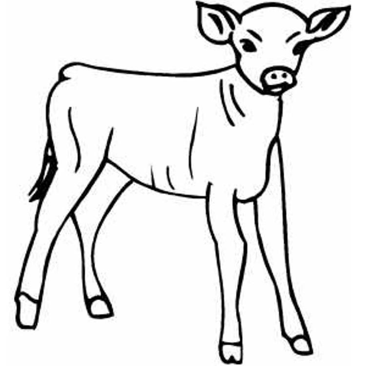 Little Calf Farm Animal Coloring Pages