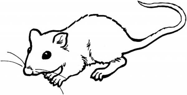 Little Mouse And Rat Coloring Pages