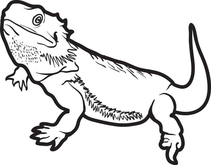 Lizard Coloring Pages Bearded Dragon
