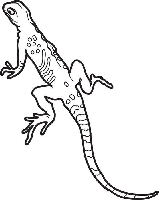 Lizard Coloring Pages For Kids Printable