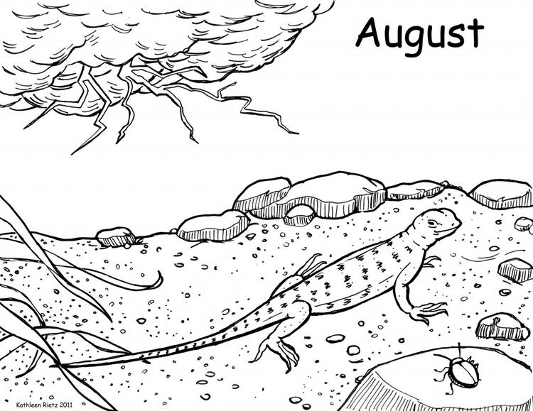 Lizard Coloring Pages In The Desert