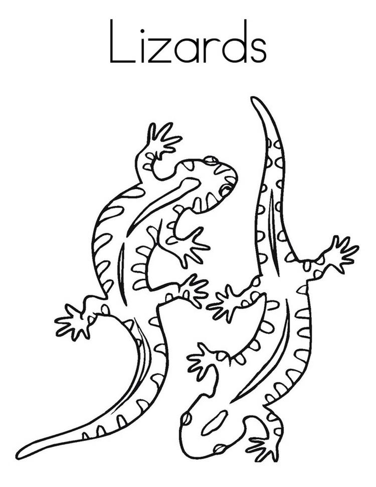 Lizard Coloring Pages Two Lizards