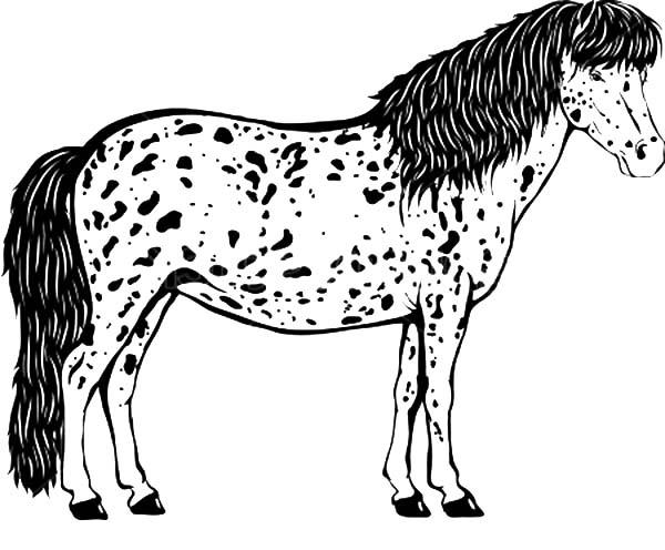Long Haired Appalooshorse Coloring Pages