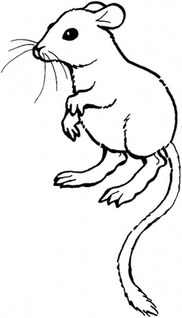 Long Tailed Mouse And Rat Coloring Pages