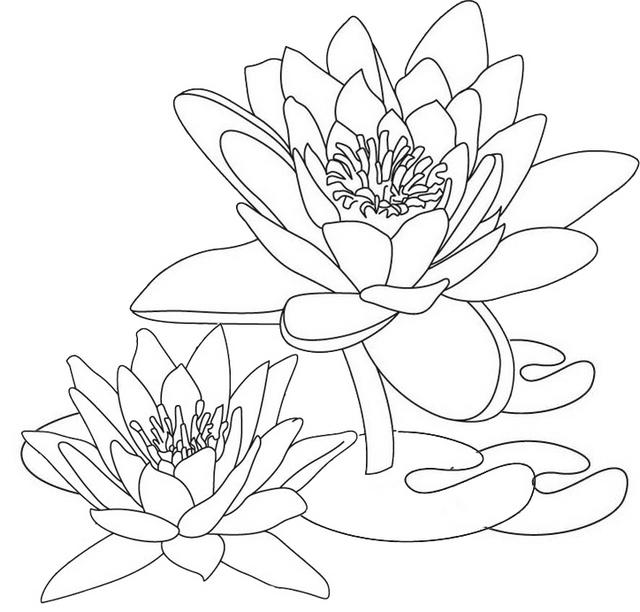 Lotus Colorful Clipart Drawing Page