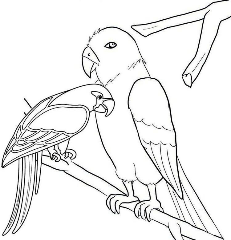 Macaw Pet Coloring Page