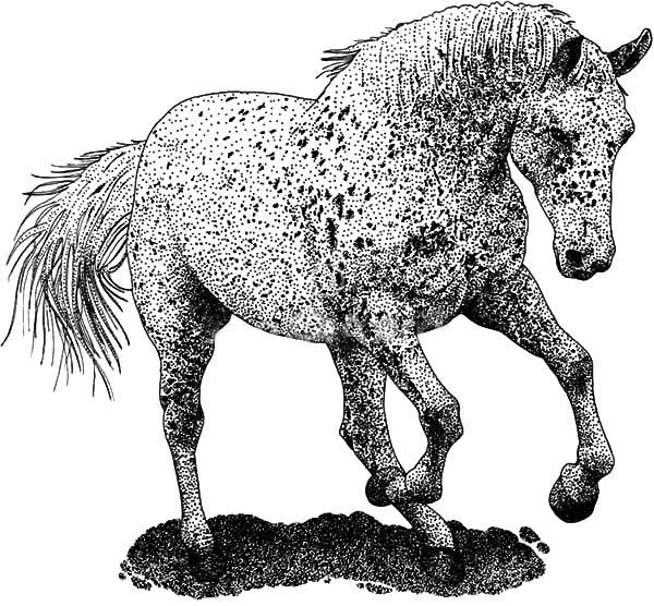 Mad Appalooshorse Coloring Pages