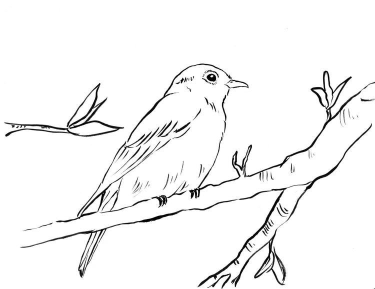Male Bluebird Coloring Picture