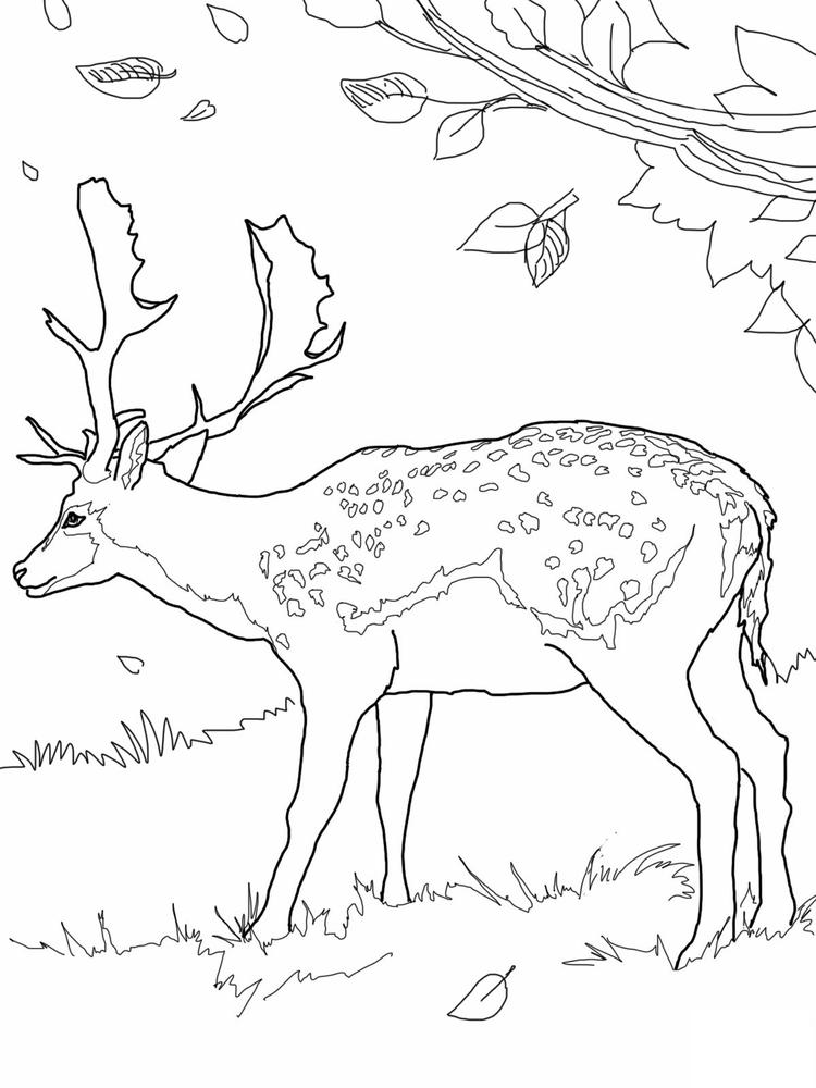 Male Deer Coloring Pages