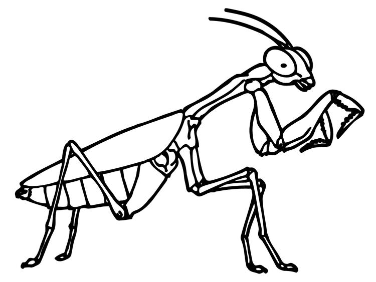 Mantis Insect Coloring Pages
